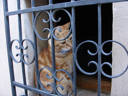 What\'s it like to be a cat in Tuscany?