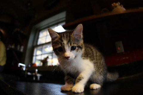 Kitchen Country Kitten