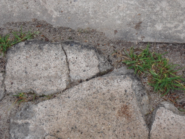 A Little Grass in the Cracks.