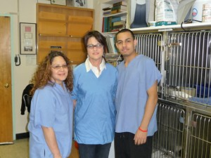 Veterinary Clinic Doctor and Staff