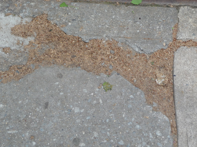 Dog Made of Leaves in Crack